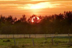 Sonnenuntergang über Weide